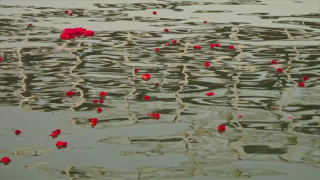 flowers floating in river ganga ripples and waves - acqua santa video stock e b–roll