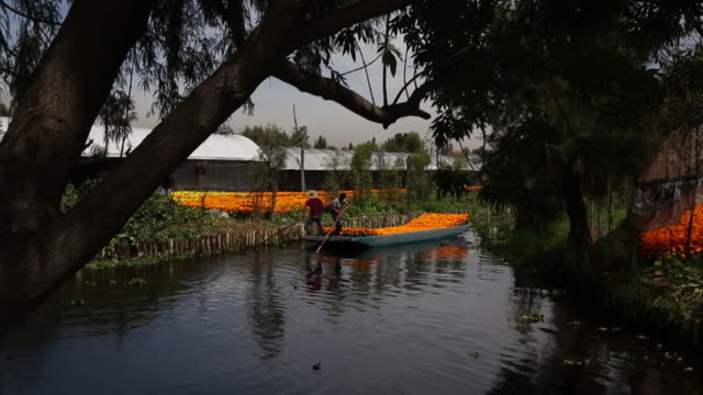 flowers for sale for day of the death in xochimilco mexico city mexico on monday october 15 2018 - orticoltura video stock e b–roll
