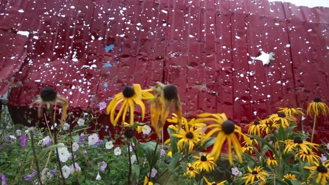 flowers grow near a fence with holes from artillery in damaged fence. war devastation in the village of semyonovka , where pro-russians and... - war stock-videos und b-roll-filmmaterial
