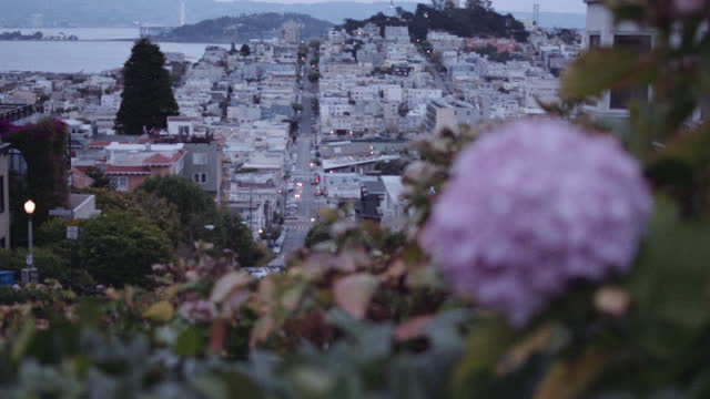 flowers high over the san francisco bay - lombard street san francisco stock videos & royalty-free footage