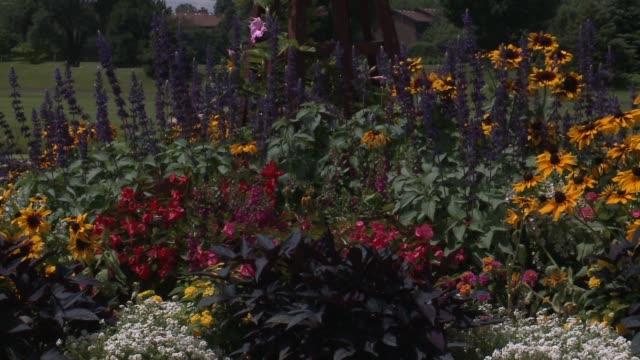 wgn flowers in a garden at the hilton oak brook resort on july 22 2015 in oak brook illinois - dupage county stock videos & royalty-free footage