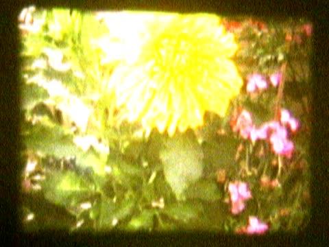 vídeos de stock e filmes b-roll de flowers in a garden - rasto de movimento