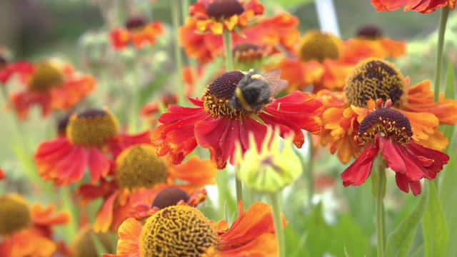 flowers in a garden with a bee collecting pollen - johnfscott stock videos & royalty-free footage