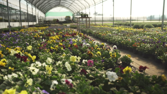 flowers in a greenhouse - garden center stock videos and b-roll footage