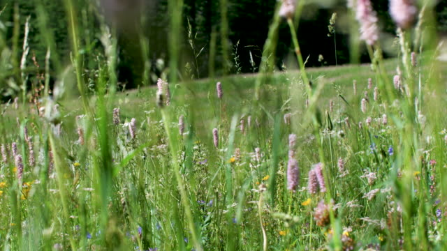 flowers in a meadow - freschezza video stock e b–roll