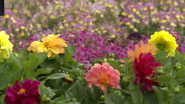 cu flowers in garden centre - flowerbed stock videos & royalty-free footage