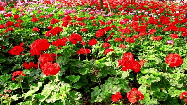 vídeos de stock e filmes b-roll de flores no jardim. - lightweight