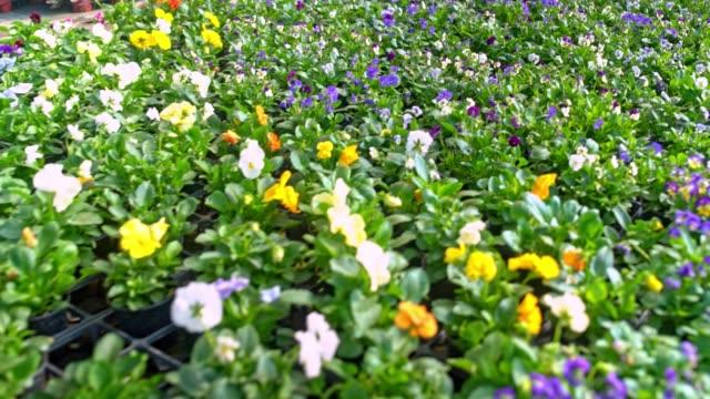 温室内の花 - 鉢植え点の映像素材/bロール