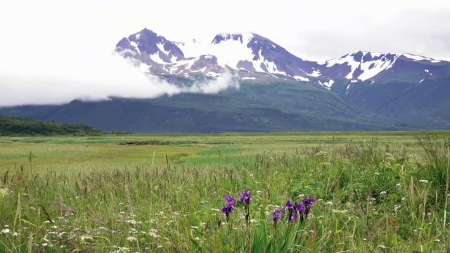 Flowers in landscape, coastal Alaska