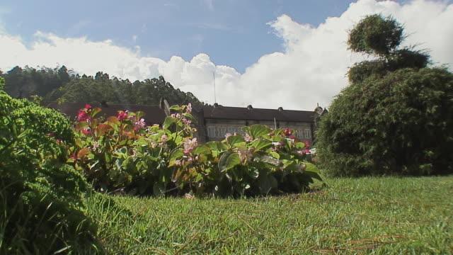 WS LA Flowers in lawn, Nuwara Eliya, Sri Lanka
