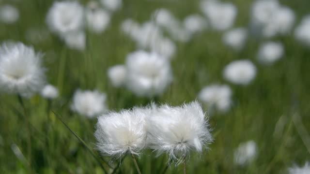 vidéos et rushes de flowers in meadow - peluche