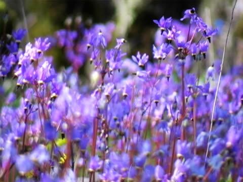 vidéos et rushes de fleurs de prairie - étamine