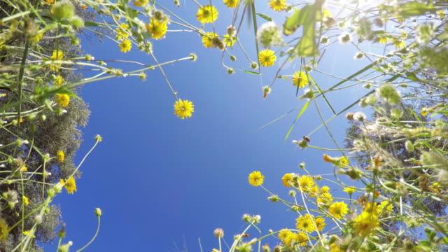 POV: Flowers in springtime