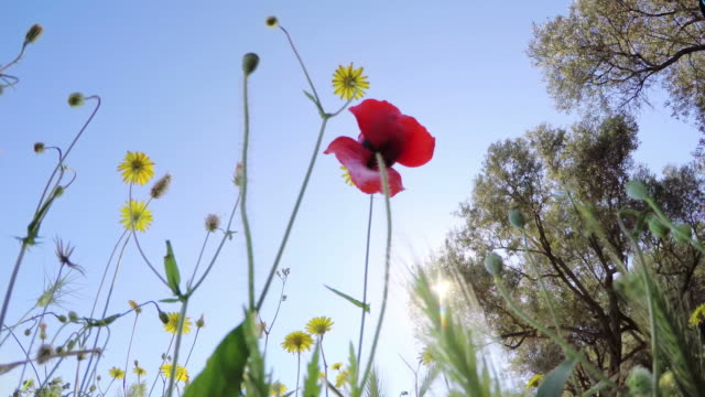 POV:  Blumen im Frühling