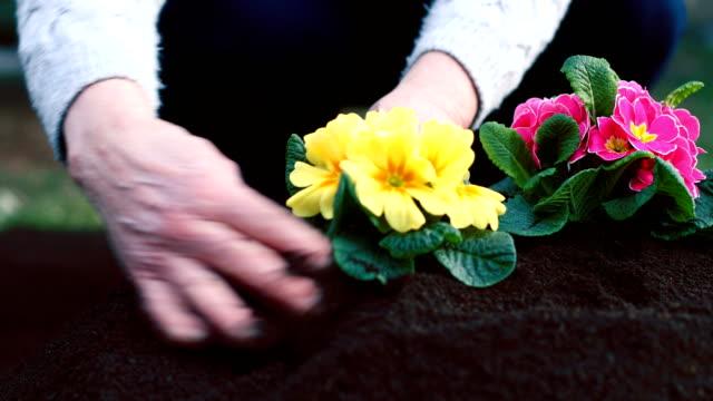 庭の花 - ダリア点の映像素材/bロール