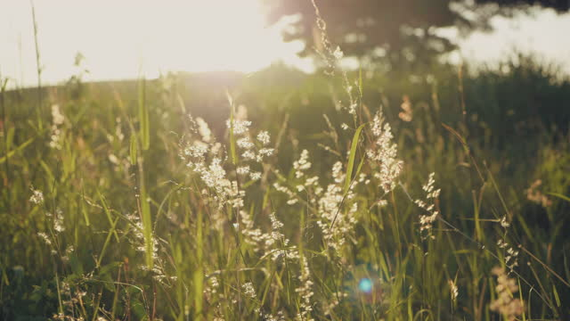 flowers in the meadow with sunset. - meadow stock videos & royalty-free footage
