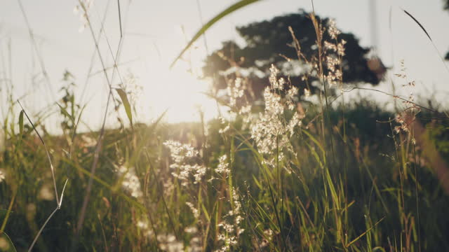 flowers in the meadow with sunset. - dreamlike stock videos & royalty-free footage