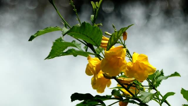 flowers in the park, bangkok - mezzogiorno video stock e b–roll