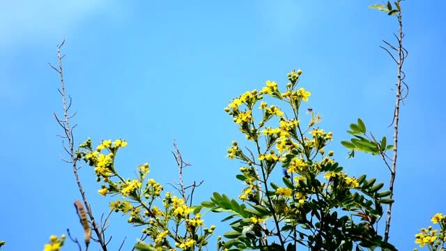 Blumen im Park, Bangkok