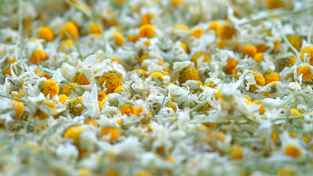 flowers of dried camomile