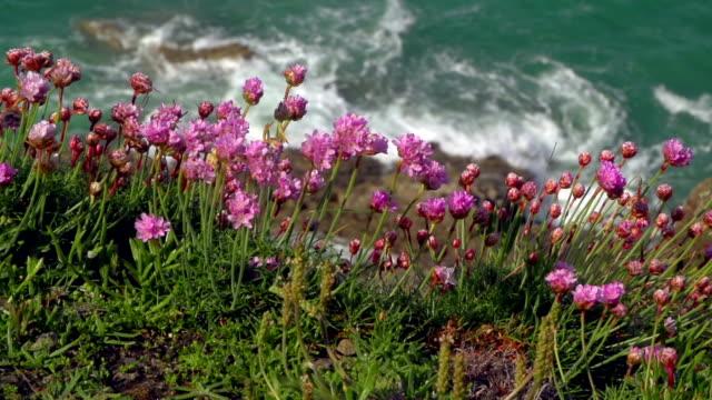 vidéos et rushes de fleurs sur la falaise - littoral