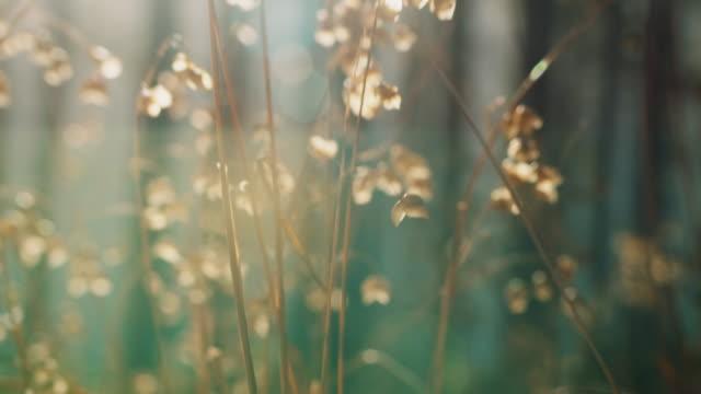 花の牧草地 - protection点の映像素材/bロール