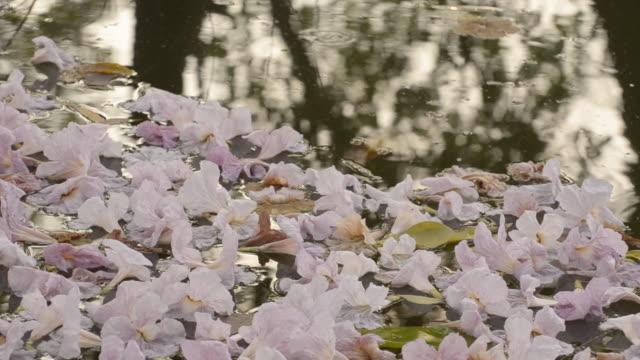 vídeos de stock e filmes b-roll de flores na água - movimento perpétuo