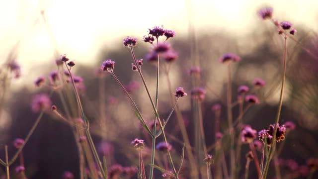 Blumen, Pollen float