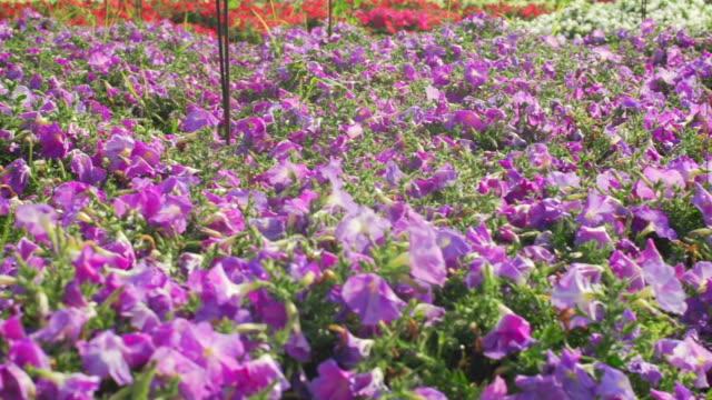 Blumen Series (1)