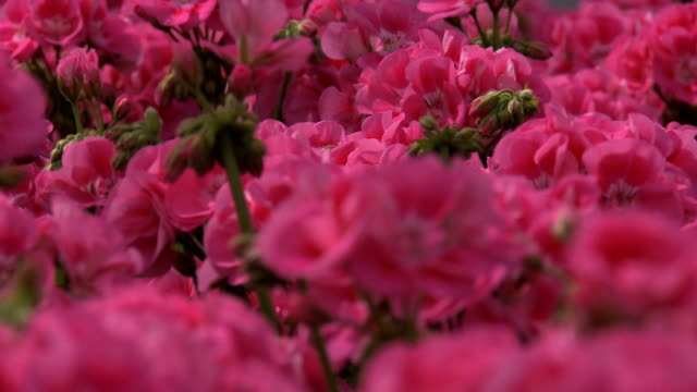 flowers - plant bulb stock videos & royalty-free footage