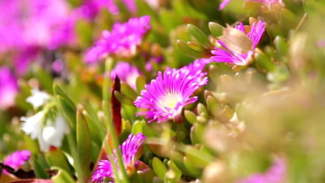 flowers - chrysanthemum stock videos & royalty-free footage