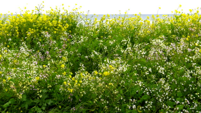 flowers. - north pacific ocean stock videos & royalty-free footage