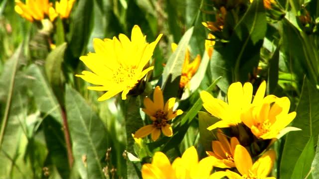 flowers - 少数の物点の映像素材/bロール