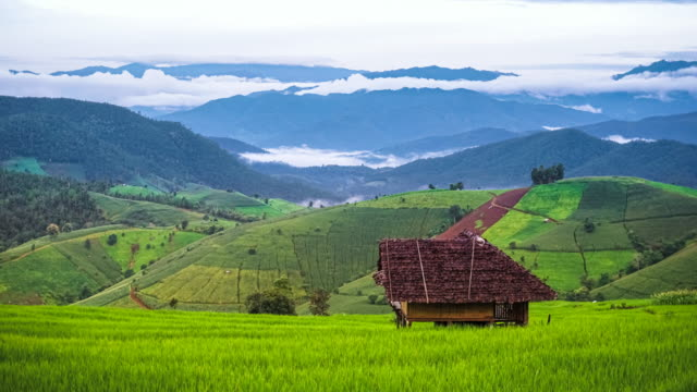 Flowing clouds over mountain ridges with beautiful green paddy in rice terrace at Pa Pong Piang, Chiang Mai northern of Thailand