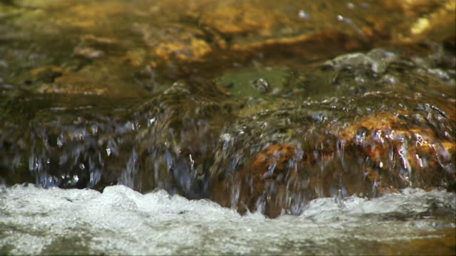 SLO MO ECU Flowing forest stream, Morristown, Vermont, USA