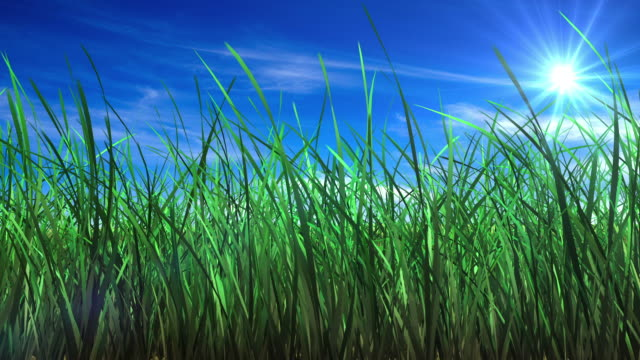 flowing grass background - reed grass family stock videos and b-roll footage