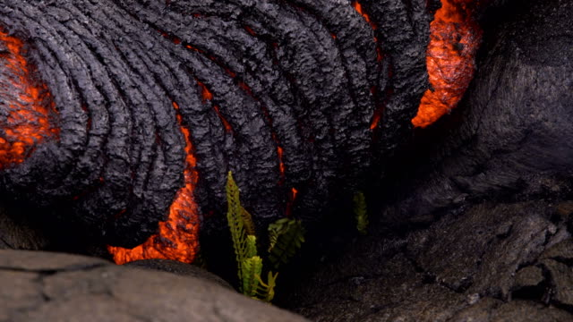 flowing lava approaches tiny fern plant day daytime glowing hot flow from kilauea active volcano puu oo vent active volcano magma - lava stock videos & royalty-free footage