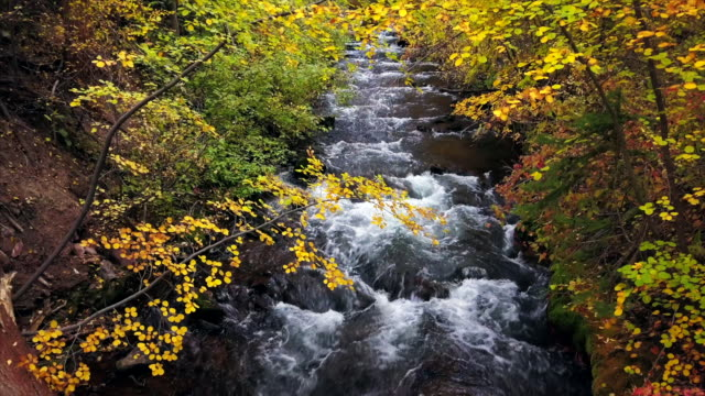 flowing mountain creek in fall - cottonwood tree stock videos and b-roll footage