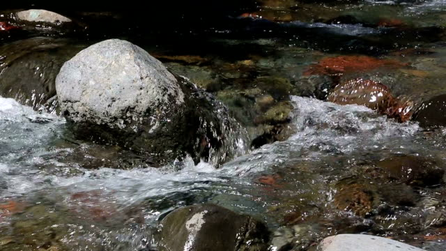 flowing river in new zealand - flowing water stock videos & royalty-free footage