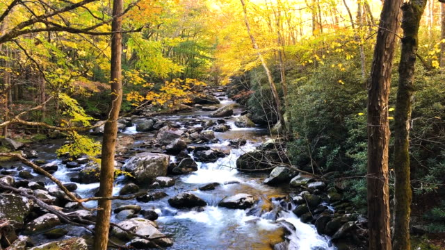 Flowing River in the Great Smoky Mountains in Autumn