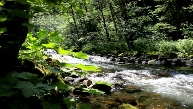 flowing river in the pacific northwest - columbia river gorge stock videos & royalty-free footage