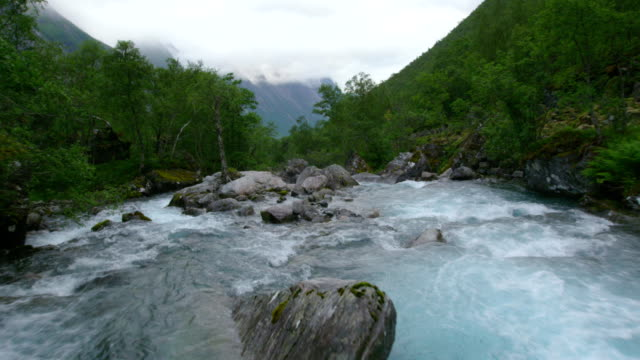 vídeos de stock, filmes e b-roll de córrego de fluxo no meio da floresta - riacho