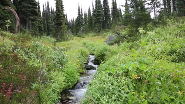 flowing stream in the mountains - garibaldi park stock videos & royalty-free footage