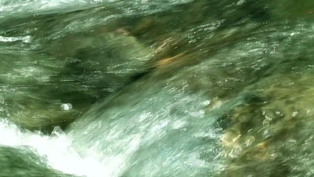 流れる水の緑の森(アナモルフィック DV