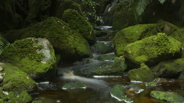 flowing water in stream  - flowing water stock videos & royalty-free footage