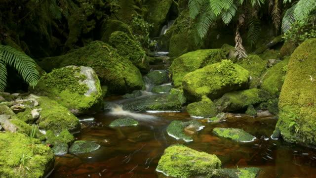 flowing water in stream  - flowing stream stock videos & royalty-free footage