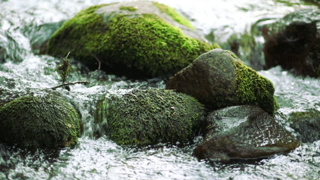 flowing water over rocks - moss stock videos & royalty-free footage