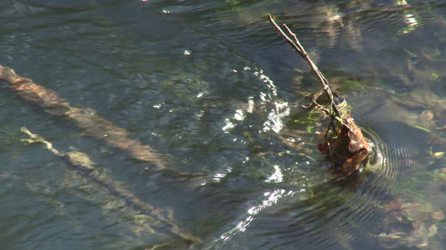 hd: flowing water - twig stock videos & royalty-free footage