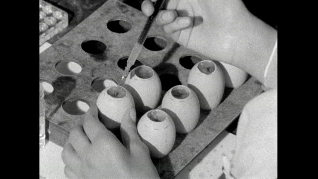 flu samples being tested in a lab using eggs; 1959 - 1959 stock videos & royalty-free footage