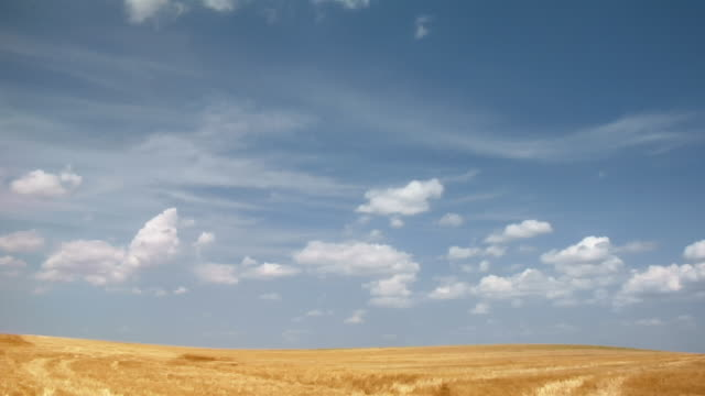 fluffy clouds race over vast golden fields. - horizon over land stock videos & royalty-free footage